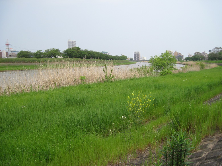 桜川の河原