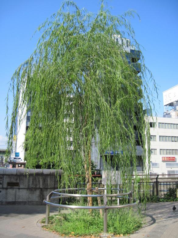 江戸城の鬼門除けのための柳