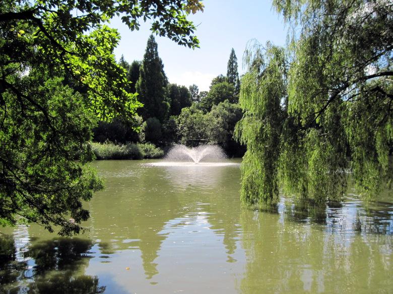 木々が池に傾いて生えアオコが発生している井の頭池