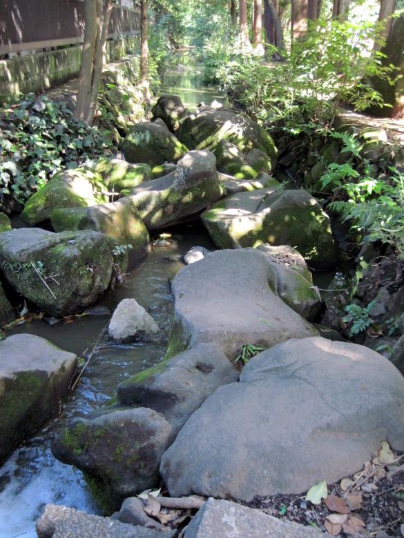 神田川源流は渓流のようだがアオコ色