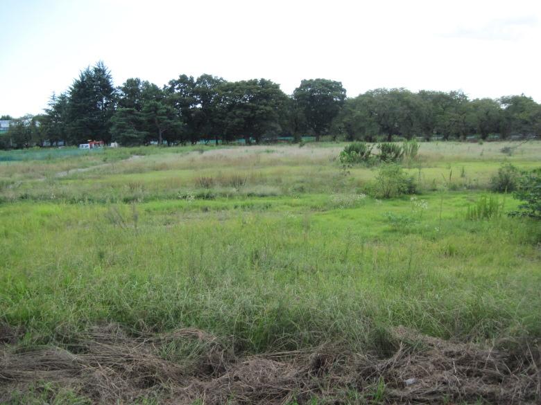杉並区という一等地にある雑草だらけの土地