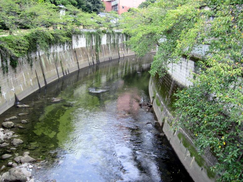 透明度の高い神田川