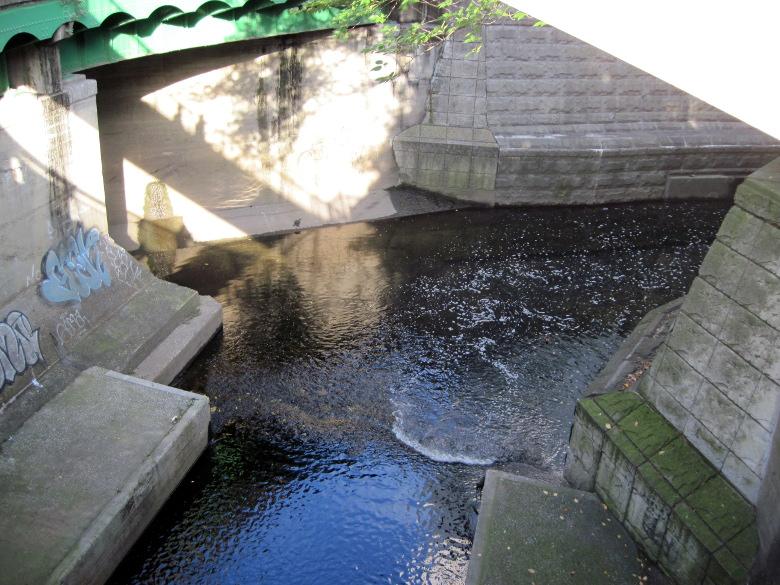 亀がいる渋谷川と笄川の合流地点