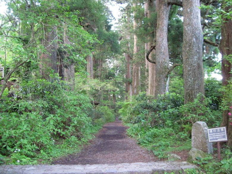 箱根宿の杉並木