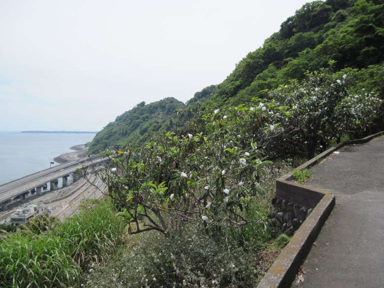 薩埵峠への登り坂