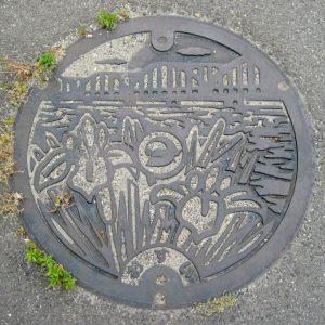 桑名市(カキツバタ)
