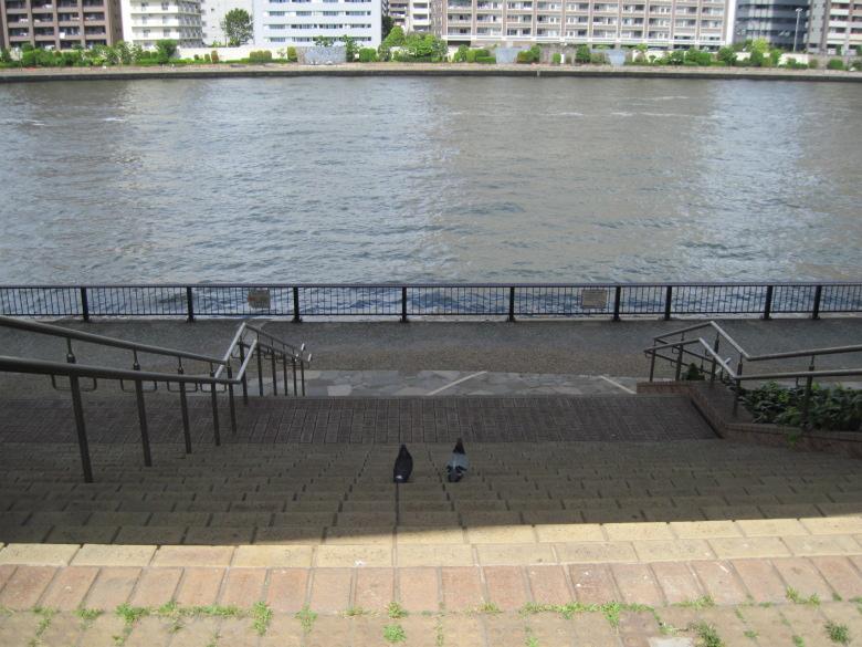 隅田川を眺める二羽の鳩