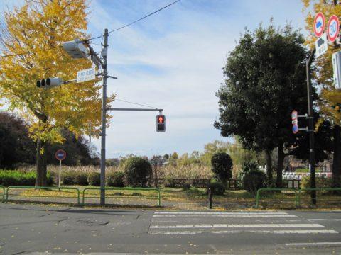 石神井公園の黄葉