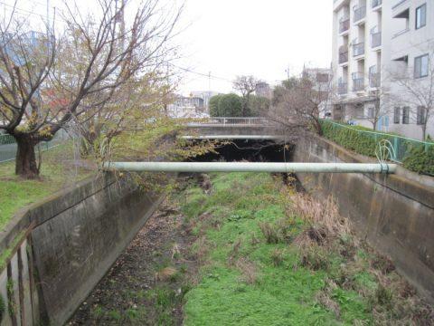 青梅街道の下から現れる石神井川