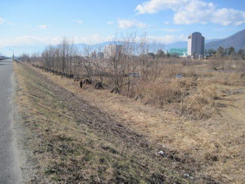 菱牛が立ち並ぶ笛吹川の河原