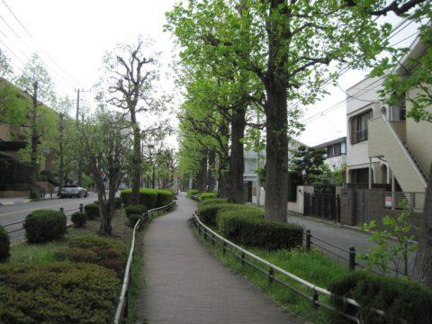 ユリの木公園