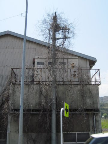 植物によって占拠された電柱
