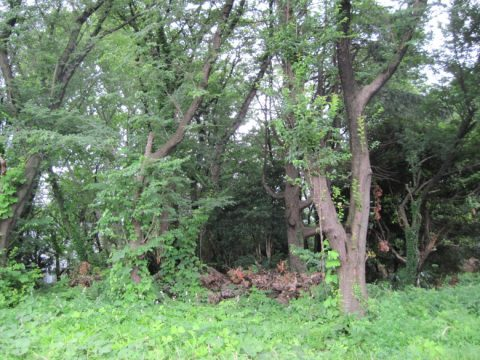 岩崎学生寮の敷地にある雑木林