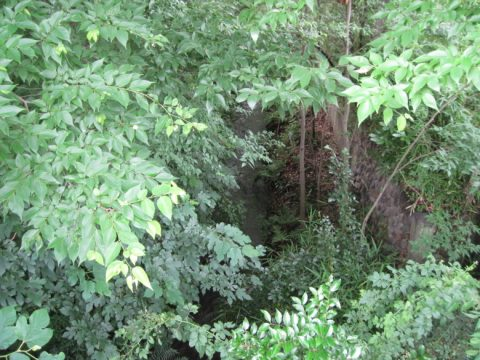 玉川上水の水の流れ