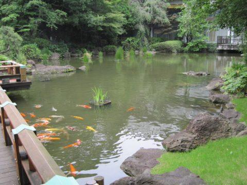東郷神社の池