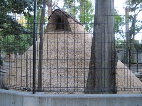 代々木八幡宮の境内に復元された古代住居跡