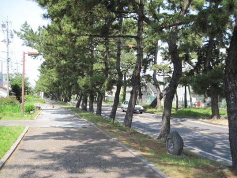池鯉鮒の松並木