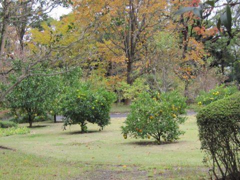 東御苑果樹古品種園