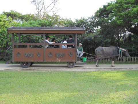 ビオスの丘の水牛車