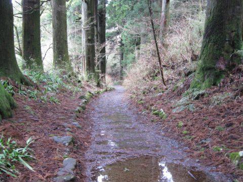 箱根旧街道の杉並木