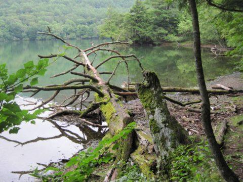 周回線歩道から見た湯ノ湖