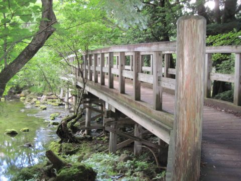 湯ノ湖周回線歩道の木橋