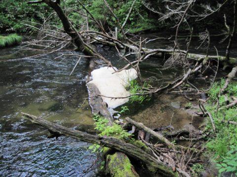 湯川に浮かぶ泡