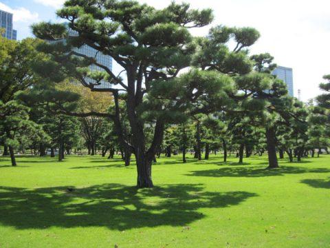 皇居外苑の芝生