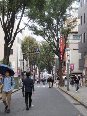 神楽坂のケヤキ並木