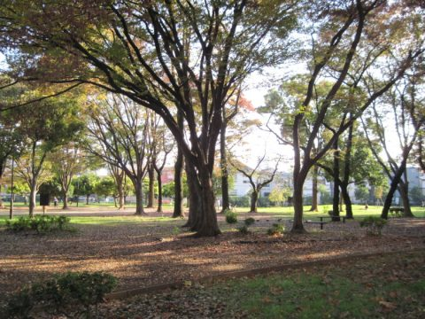都立青山公園の北地区